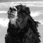 soft llama fibre