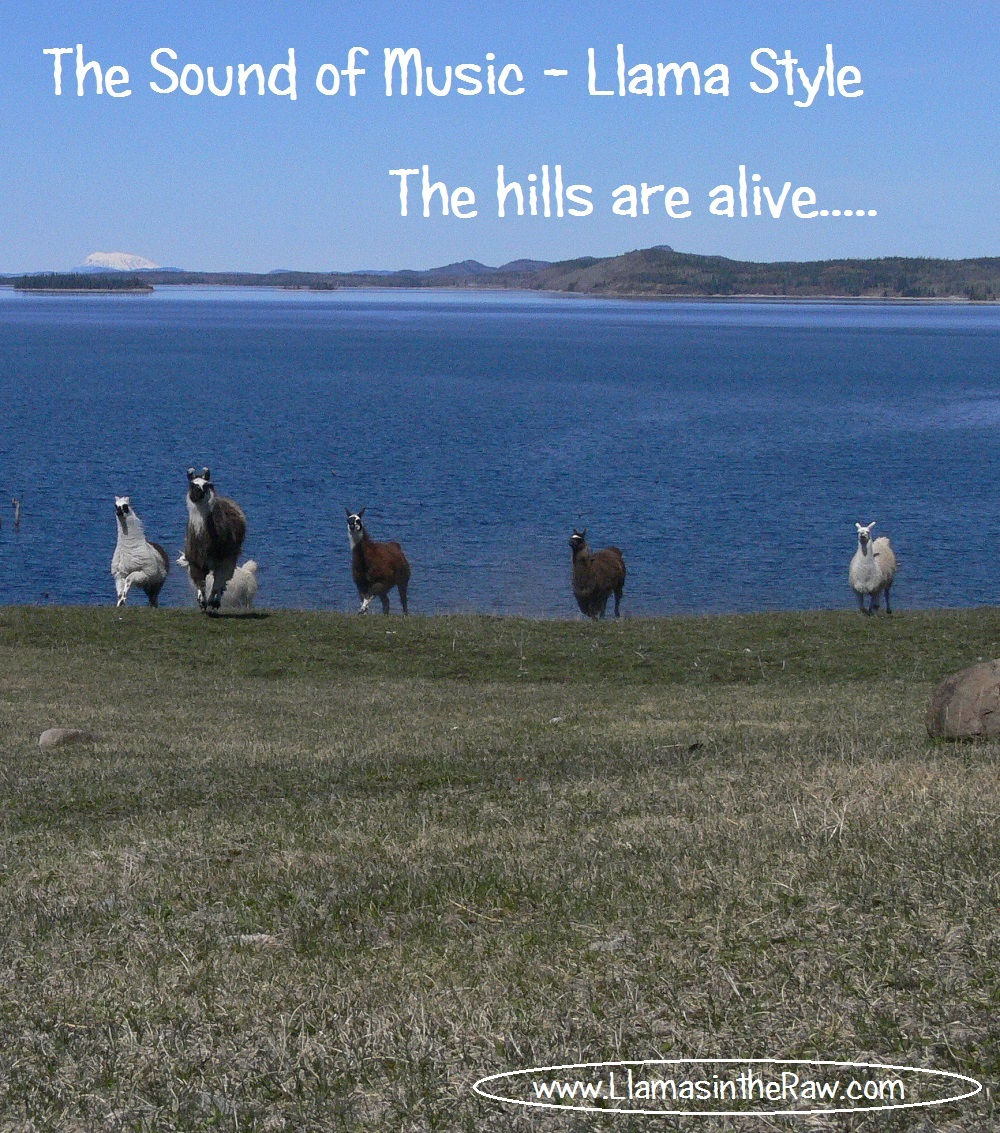 The Hills Are Alive…..