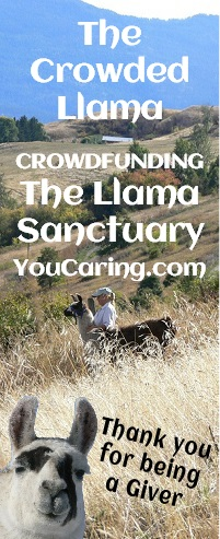 the llama sanctuary crowdfund